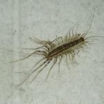 Western Exterminating Haltom City Texas Fort Worth pest control entomology