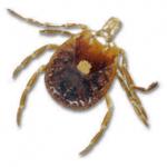 dog ticks Western Exterminating Haltom City Texas Fort Worth pest control entomology