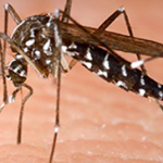 mosquito Western Exterminating Haltom City Texas Fort Worth pest control entomology
